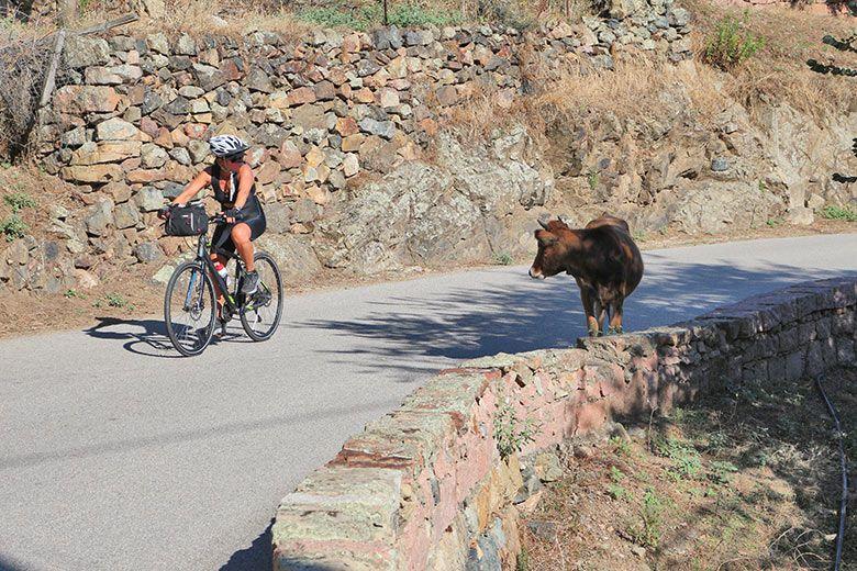 cycling-on-corsica-bike-tour